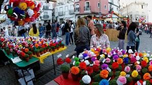 Pandemia afeta produção e venda de manjericos em Lisboa