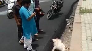 Vídeo arrepiante mostra cão enterrado vivo em estrada de alcatrão