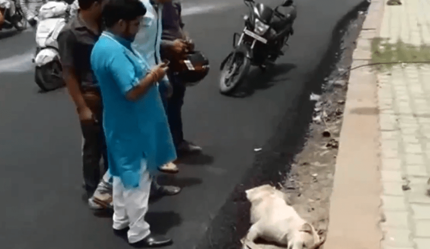 Alguns moradores ainda tentaram salvar o animal