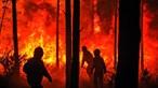 Mais de uma centena na cadeia por incendiar matas