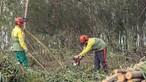 Prazo para limpar terrenos termina hoje e proprietários voltam a arriscar coimas