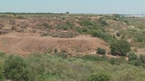 Centenas de árvores abatidas em zona protegida de Vila Real de Santo António