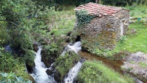 No meio da natureza em Albergaria-a-Velha