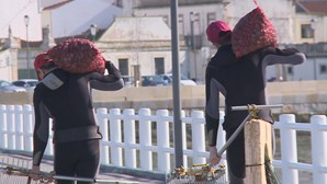 Polícia Marítima oferece pescado apreendido a instituições de solidariedade