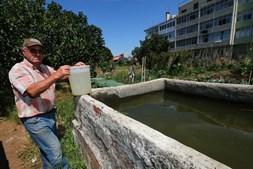 Hortas urbanas: 'viver' o campo na cidade