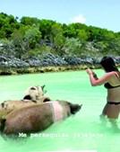 Salvio apaixonado em ilha paradisíaca