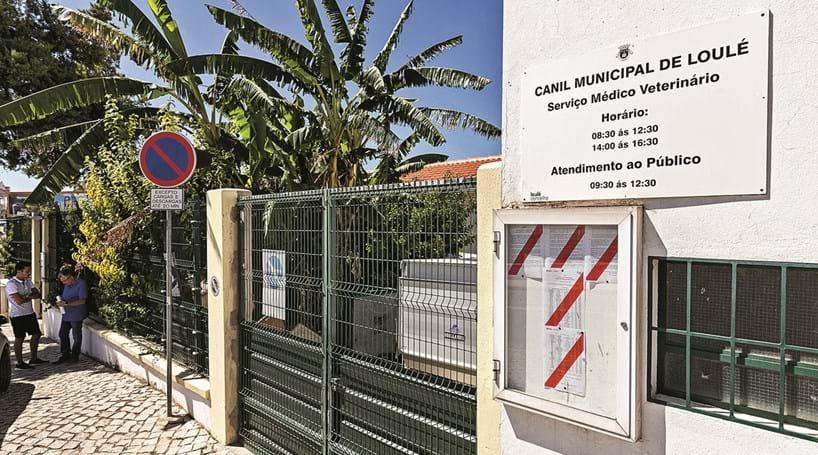 a03a80195a3b6d Canil dentro da cidade incomoda moradores de Loulé - Cidades ...