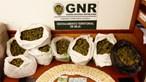 Quatro suspeitos detidos por tráfico de droga em Beja