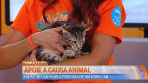 Evento solidário Animal Fest