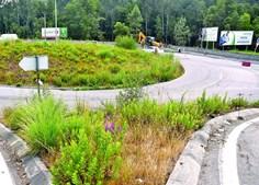 Vila Nova de Famalicão exige limpeza de bermas das estradas nacionais