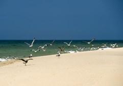 Praia da Ilha Deserta, Barreta, Faro