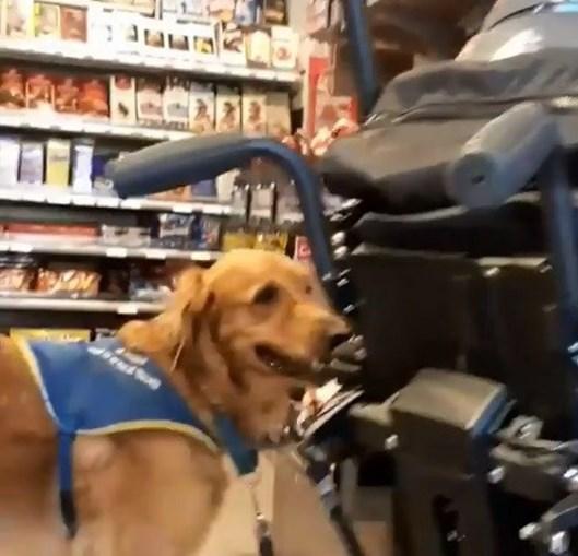 Jovem deficiente expulso de supermercado por causa do cão guia