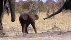 Cria de elefante resgatada após queda em poço de 9 metros na Índia