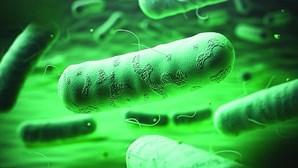 Legionella atinge 575 pessoas depois de Vila Franca de Xira