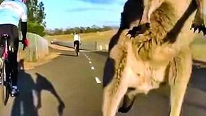 Canguru faz ataque à ninja a ciclista