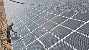 Associação Portuguesa do Ambiente aprova central fotovoltaica na herdade da Torre Bela