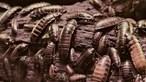 Cientistas desenvolvem pão feito de farinha de baratas