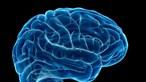 Coronavírus não infeta diretamente o cérebro mas causa danos, revela estudo
