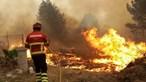 Governo já pagou 67 milhões de euros aos agricultores afetados em 2017 pelos incêndios