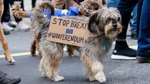 Cães marcham contra o Brexit