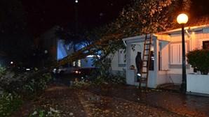 Vídeos mostram rasto de destruição do furacão Leslie