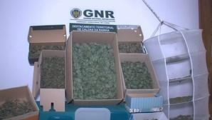 Pai e filho detidos em Alcobaça por cannabis que valeria mais de 50 mil euros