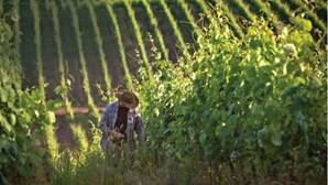 Conheça a rota dos vinhos verdes e descubra os melhores sabores