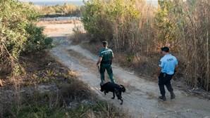 GNR e bombeiros procuram mulher de 81 anos desaparecida em aldeia de Vila Real