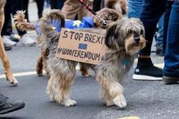 Cães protestam contra o Brexit