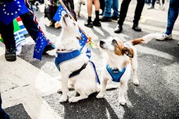 Cães marcham contra o Brexit
