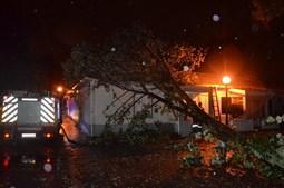 Casa atingida por árvore, no Porto
