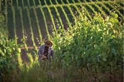 Rota dos vinhos verdes