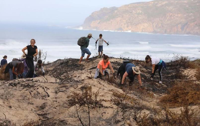 Reflorestação do Parque Natural Sintra-Cascais começou este sábado