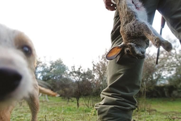 Doença está presente entre 10 e 20% dos coelhos bravos nos distritos de Lisboa, Setúbal, Santarém e Évora