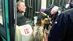 Homem rouba cabra e leva-a de metro em Paris