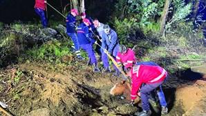 Bombeiros salvam cavalo de 200 quilos após queda em buraco