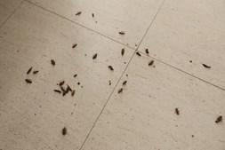 Moradores dos Olivais indignados com praga de baratas