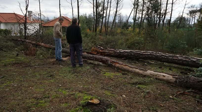93d6c45611c Morre a cortar pinheiro em frente à mulher e ao pai - Portugal ...