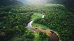 Desflorestação na Amazónia brasileira cai 21% em agosto mas continua elevada