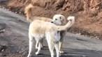 Um mês depois dos incêndios na Califórnia reencontra cão que foi forçada a abandonar