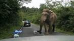 Elefante assusta visitantes de parque na Tailândia