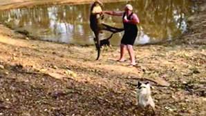 Homem atacado por canguru não deixa cair cerveja