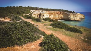 Impacte ambiental trava novo empreendimento em Lagoa