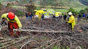 Existiram 286 pedidos de apoio agrícola após incêndio