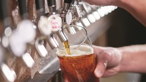 Fabricante norte-americana de cerveja procura provador canino