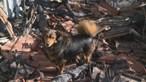 Cadela não abandona casa onde dono morreu carbonizado em Chaves