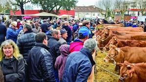 Troca e venda de gado é imagem de marca da Feira dos Vinte