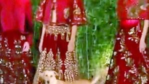 Cão quer ser modelo e invade desfile na Índia
