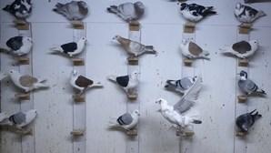 Fezes de pombo tapam talão de estacionamento e condutor é multado
