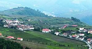 Aldeia de Provesende é muito conhecida pelas suas inúmeras vinhas